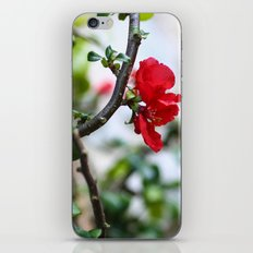 Wee Red Flowers iPhone & iPod Skin