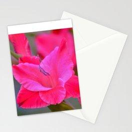 Pretty Pink Gladiolas Stationery Cards