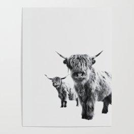 HIGHLAND COW - LULU & SARA Poster