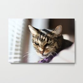 Cat Snarl Metal Print
