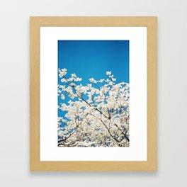 White Blooms against Blue Sky Framed Art Print