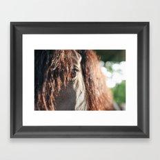 sunrise stallion Framed Art Print