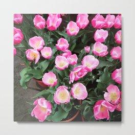 Bright Pink Tulips Metal Print