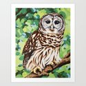 Barred Owl by laurawolf