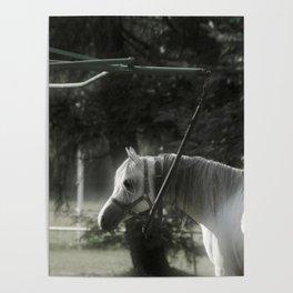 In captivity Poster
