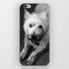 Odie (B/W) iPhone & iPod Skin