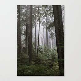 Forest II Canvas Print