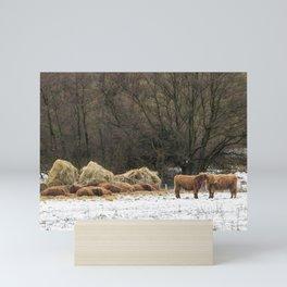 Scottish highland cows keeping warm in winter Mini Art Print