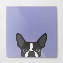 Boston Terrier Violet Metal Print
