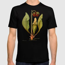 Sarracenia Purpurea Vintage Illustration  T-shirt