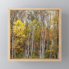 autumn trees in a marsh Framed Mini Art Print
