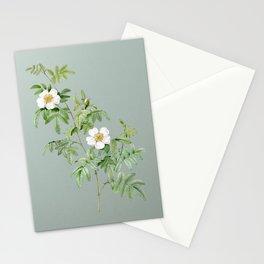 Vintage Blooming Musk Rose Botanical Illustration on Mint Green Stationery Cards