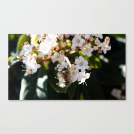 Bee in Late Winter (1 of 2) Canvas Print