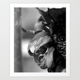 Dying Flower Art Print