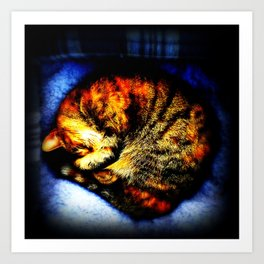 "Curled Up Tabby Cat, Sleeping - ""The Minnow Cat Sleeps"" Art Print"