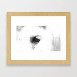 Shetland Pony in Fort Steele,British Columbia Framed Art Print