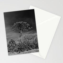 Araucária - Araucaria angustifolia Stationery Cards