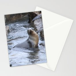 California Sea Lions in Monterey Bay Stationery Cards