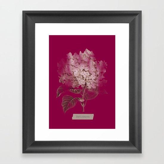 HYDRANGEA 2 Framed Art Print