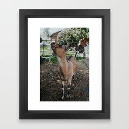 Finnigan Framed Art Print