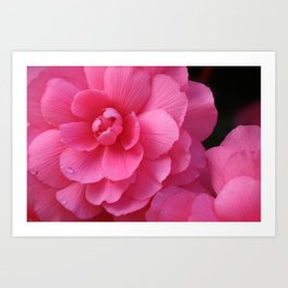 Pink Flower Bloom from Butchart Gardens Art Print