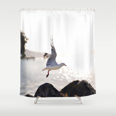 Seagull takes flight over Dunedin's MacAndrew Bay Shower Curtain