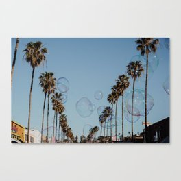 Bubbles & Palm Trees Canvas Print