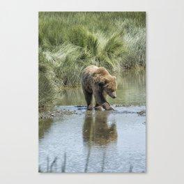 Brown Bear Cub Crossing a Stream Canvas Print