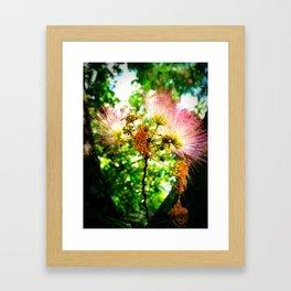 Mimosa Flower Framed Art Print