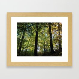 DEEP WOODS FALL SUNRISE (Crescent Trail, Fairport, NY) Framed Art Print