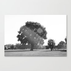 Tree in the Sun Canvas Print