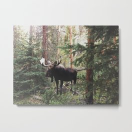 The Modest Moose Metal Print