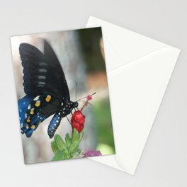 Pipevine Swallowtail (Battus philenor) Stationery Cards