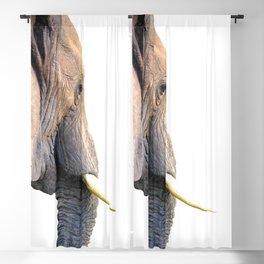 Elephant portrait Blackout Curtain