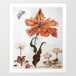 A Parrot Tulip Auriculas & Red Currants with a Magpie Moth Caterpillar Pupa by Maria Sibylla Merian Art Print