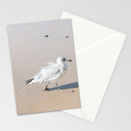 Juvenile Herring Gull Stationery Cards
