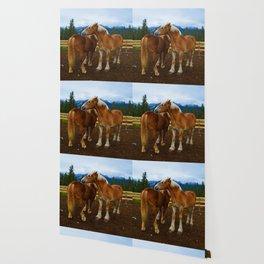 Horses in Jasper National Park, Canada Wallpaper