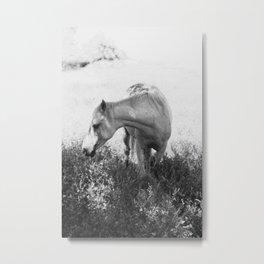 White Beauty Metal Print