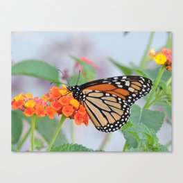 The Monarch Has An Angle Canvas Print