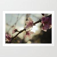Peach Blossoms Art Print