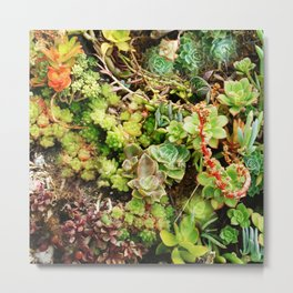 Awesome Succulent Garden Party Soiree Metal Print
