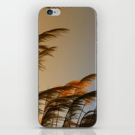 Sunset in autumn. Pampa grass iPhone Skin