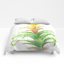 Bromeliad - Tropical plant Comforters