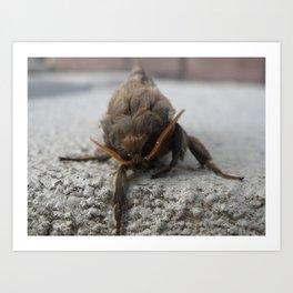 Moth Definitely! Art Print