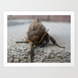 Moth Definitely! Art Print
