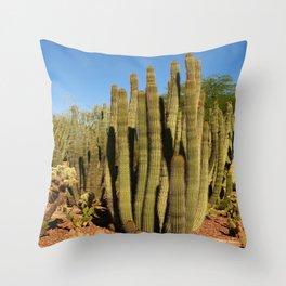 Organpipe Cactus Throw Pillow