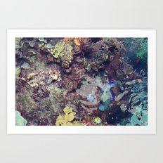 coral waters Art Print