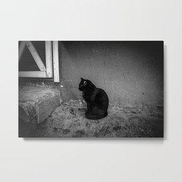 Black Farm Cat 2 Metal Print