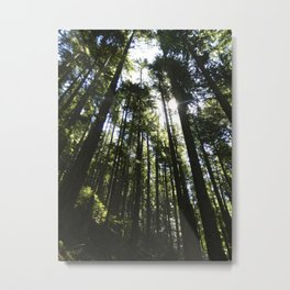 Towering Trees Metal Print