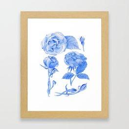 Blue Roses Watercolor Framed Art Print
